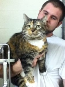 """""""Mama"""" was Hilda's cat who is now in a shelter. She's 8 years old, good with other animals, and an door cat. Call the APS in Yanceyville to adopt her!  (336) 694-4921"""