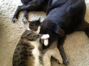 My cat, Halen, and my dog, Phoebe, were both adopted from an animal shelter.